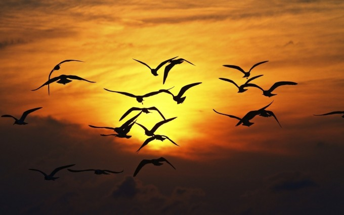 sunset birds fly images