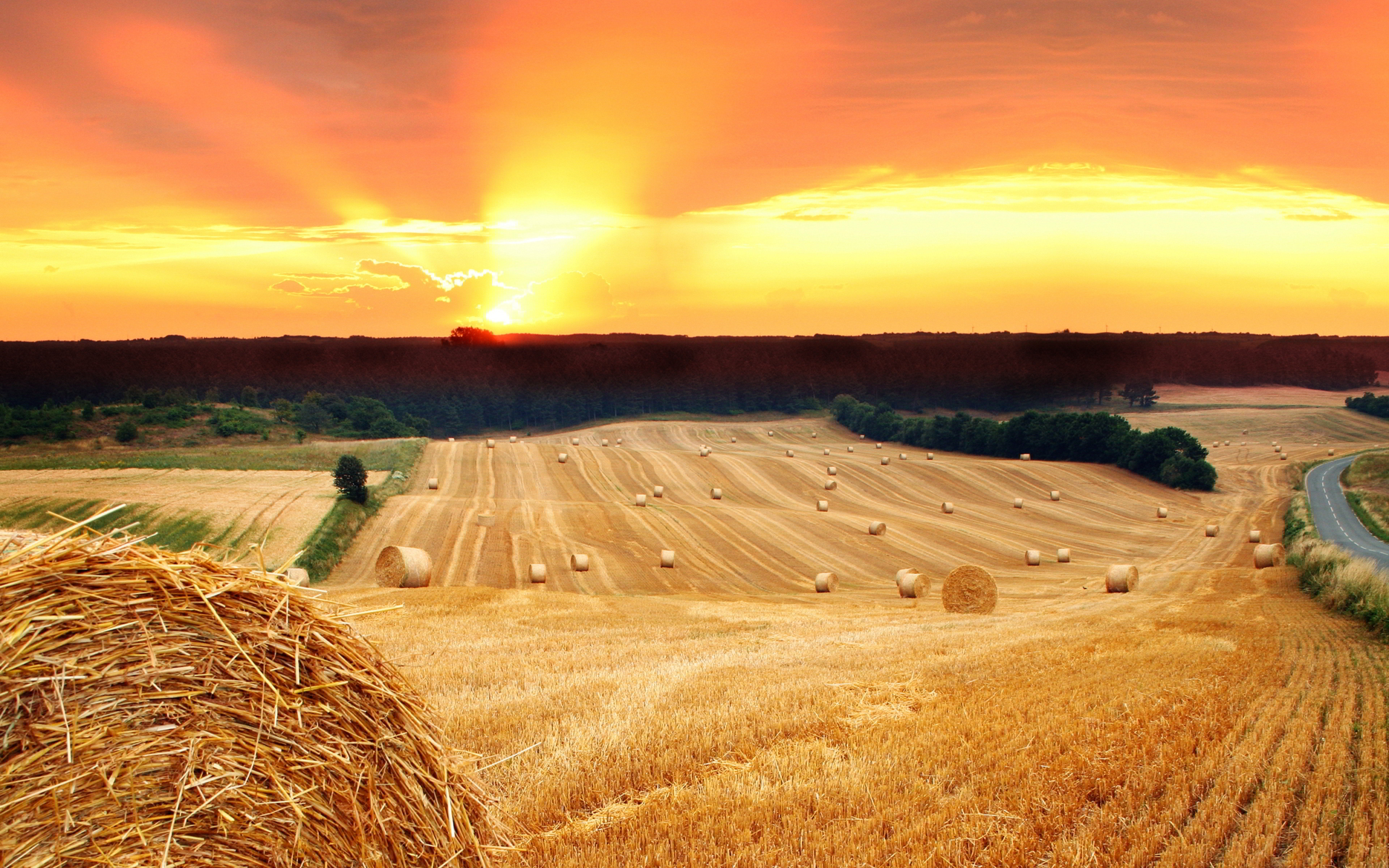sunset field crops images