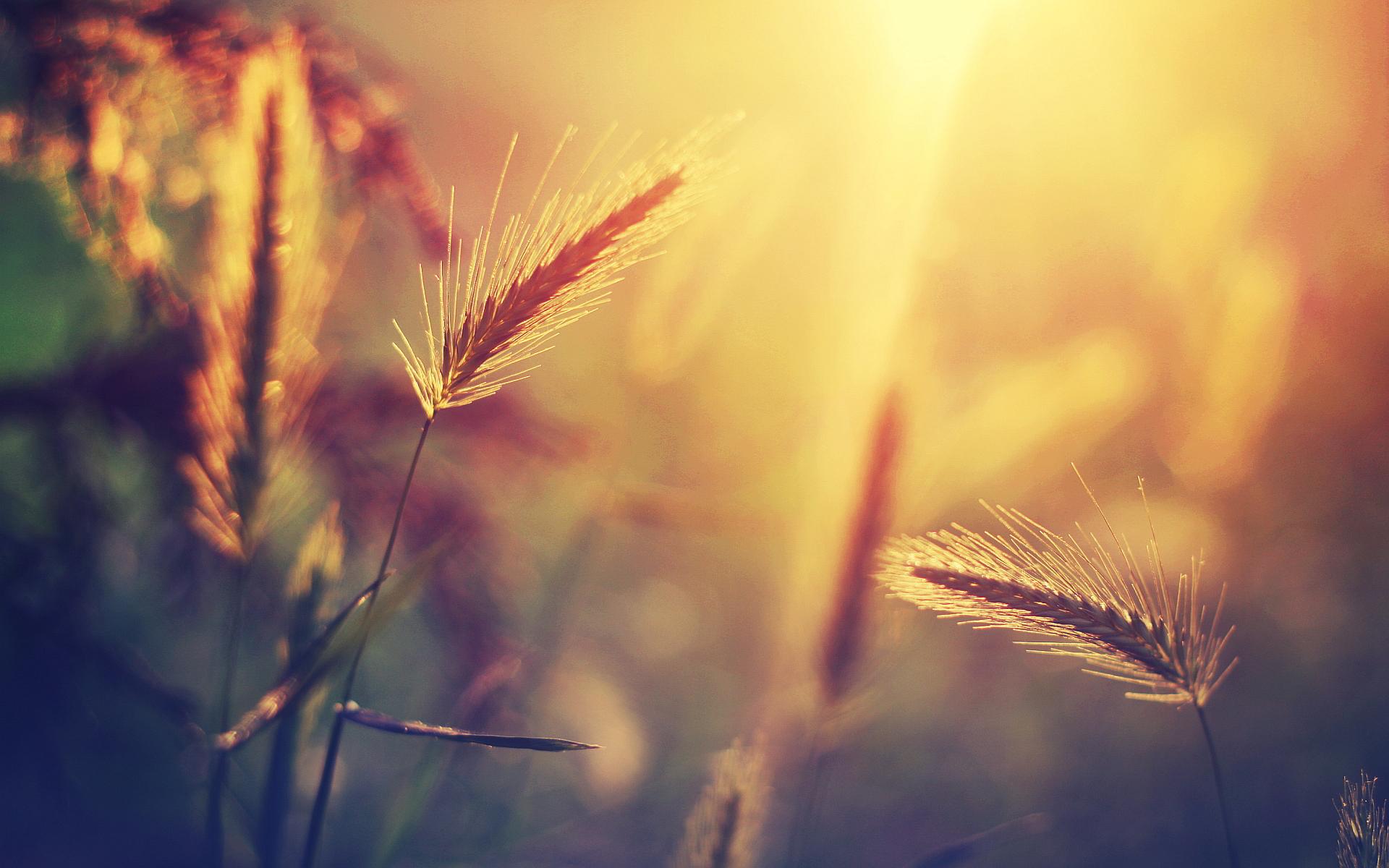 sunset images grass