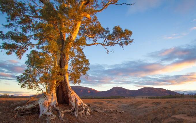 sunset photos tree