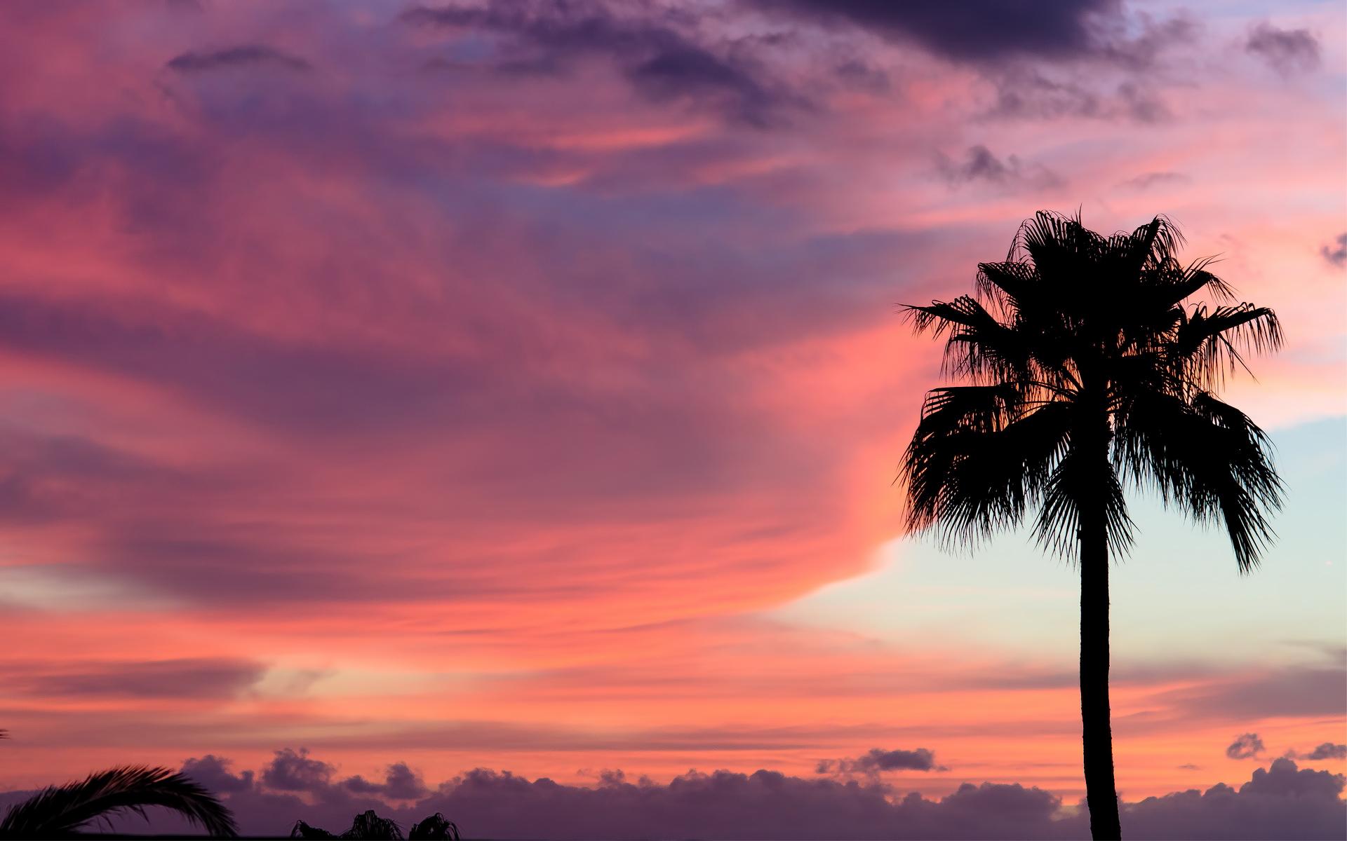 sunset wallpaper trees