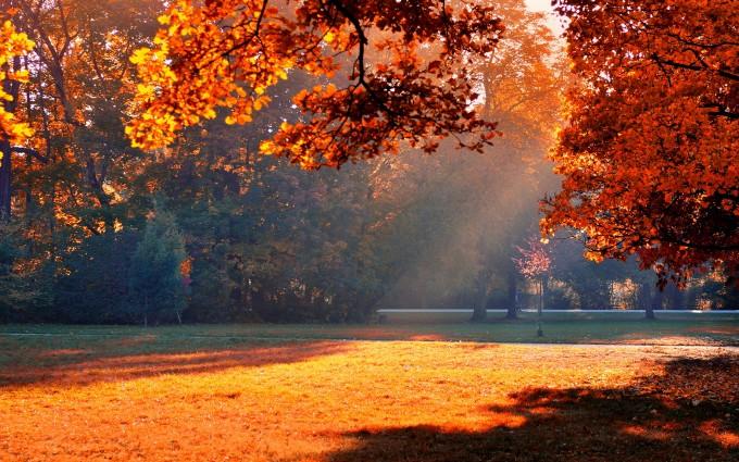 sunshine autumn trees