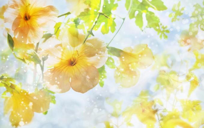 sunshine wallpaper flowers