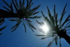 sunshine wallpaper palms