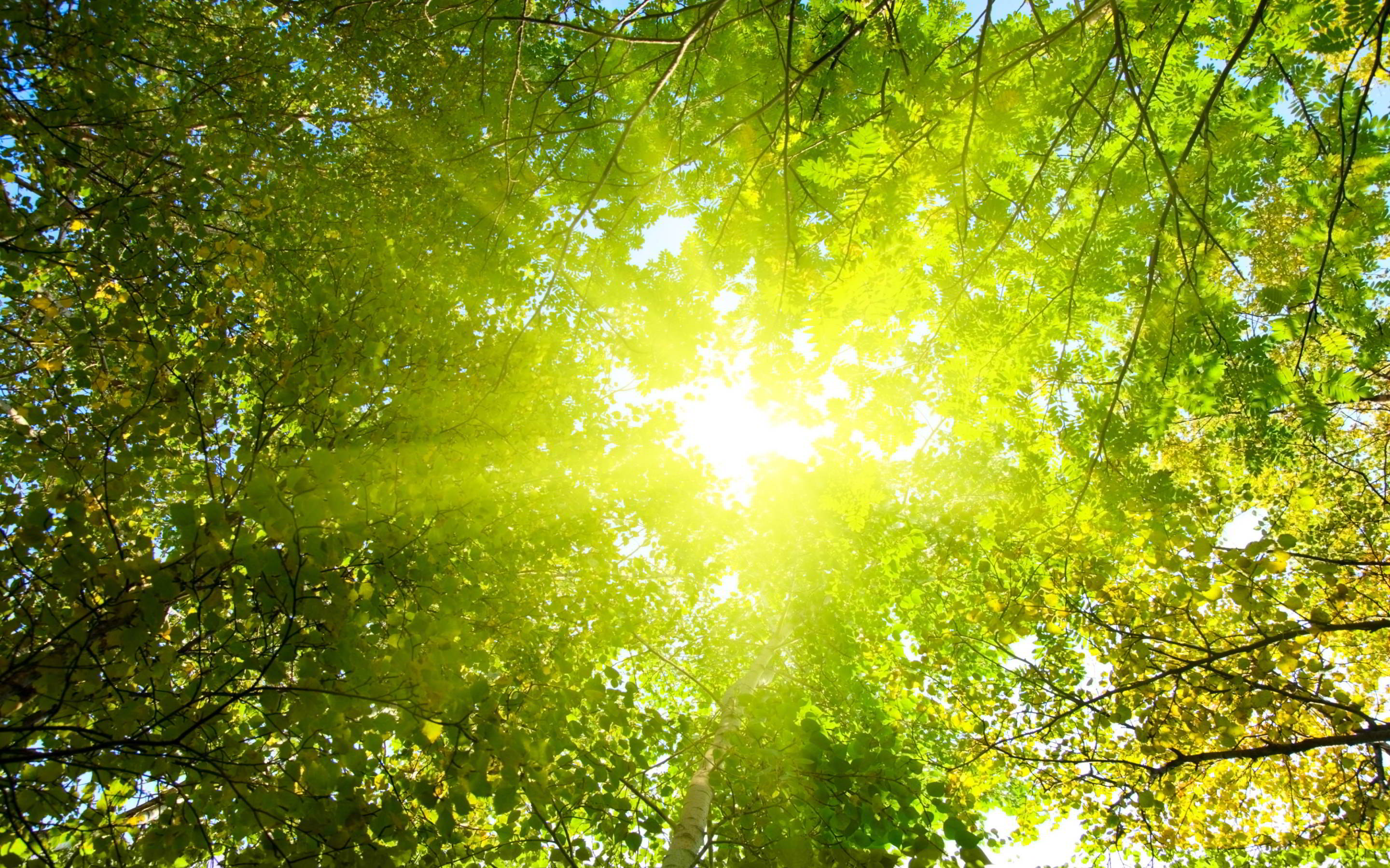 sunshine wallpaper treetop