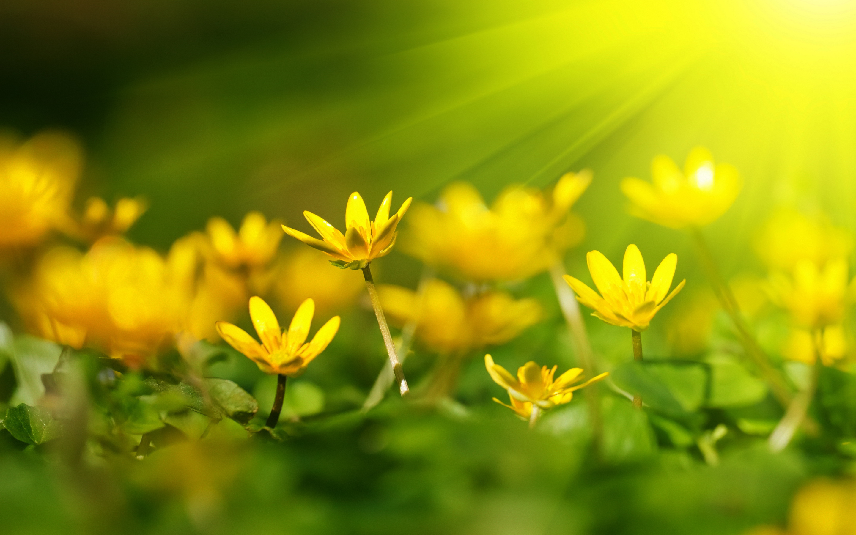 sunshine wallpaper yellow flowers