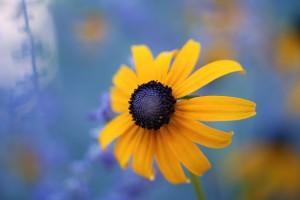 susan flower