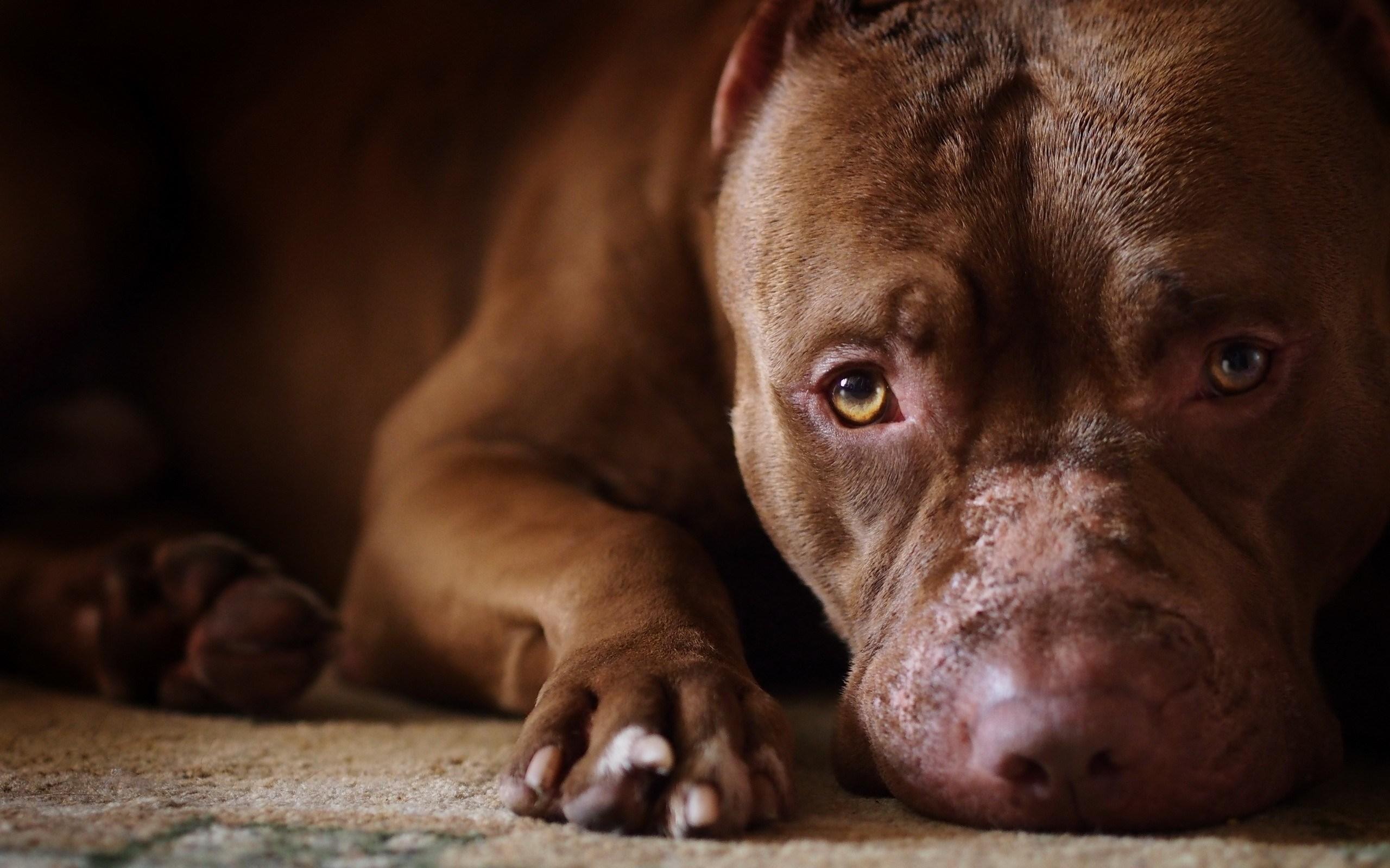 sweet dog close up