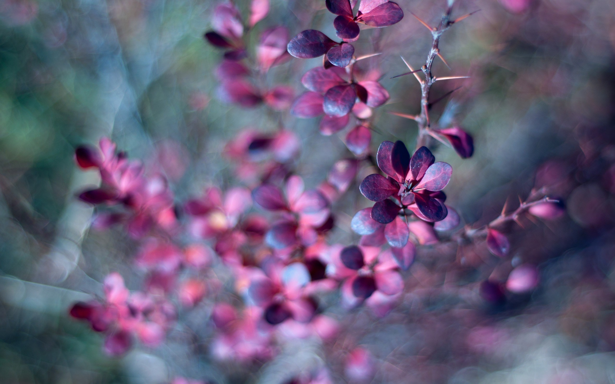 thorn leaves purple forest