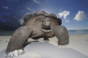 tortoise wallpaper seashore