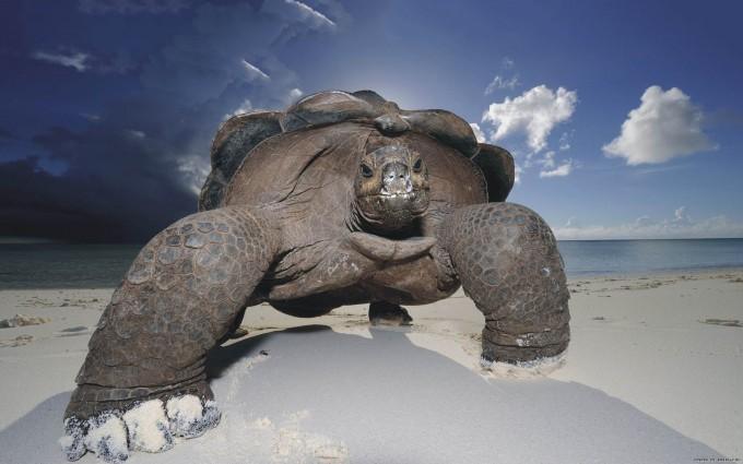 tortoise wallpaper seashore