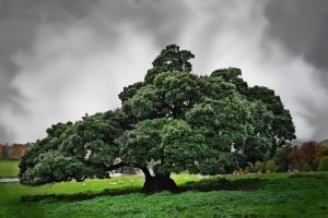 tree green wallpaper