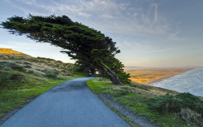 tree pictures coastal