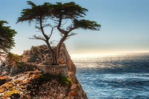 tree pictures coastal cliff