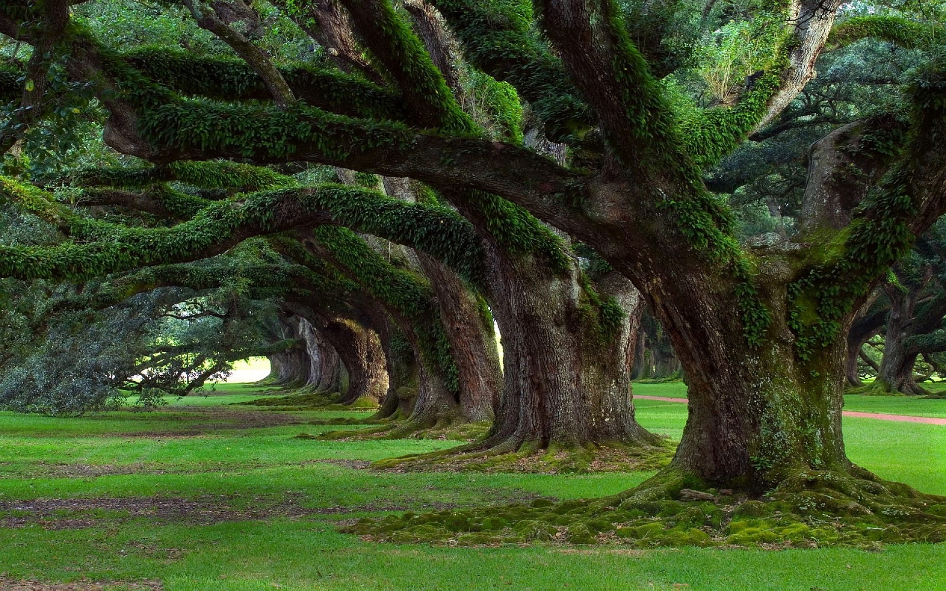 tree pictures moss