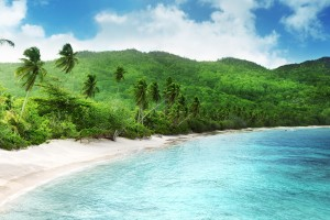 tropical nature scenery