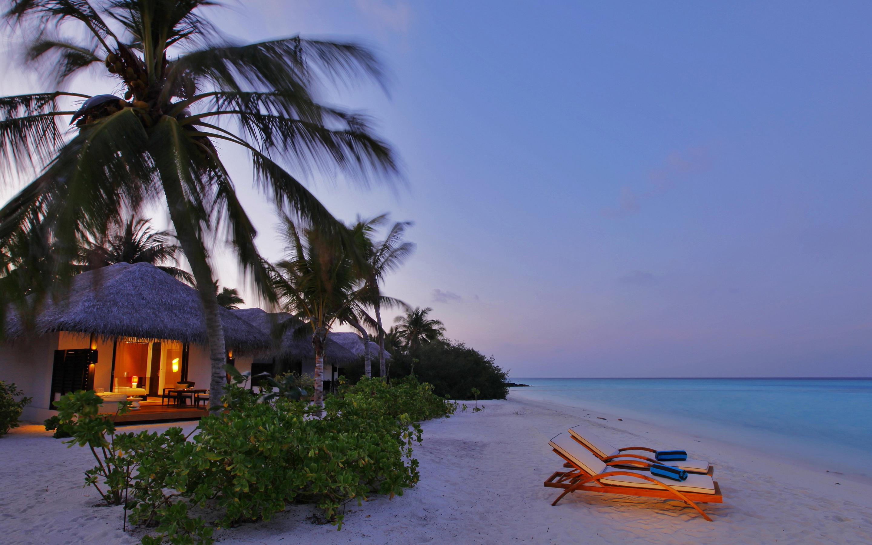 tropical wallpaper evening