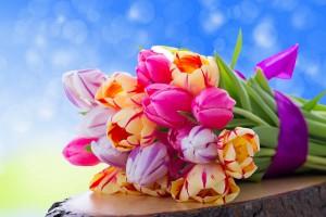 tulips bouquet flowers