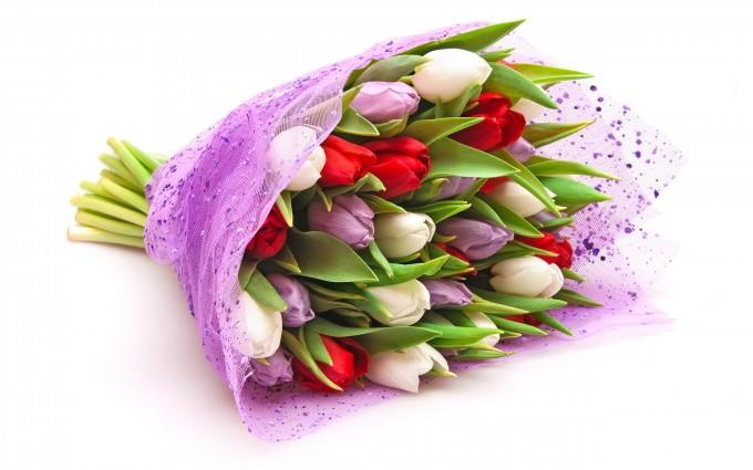 tulips photos free