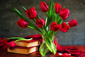tulips wallpapers hd red