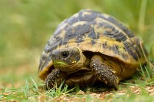 turtle little wallpaper