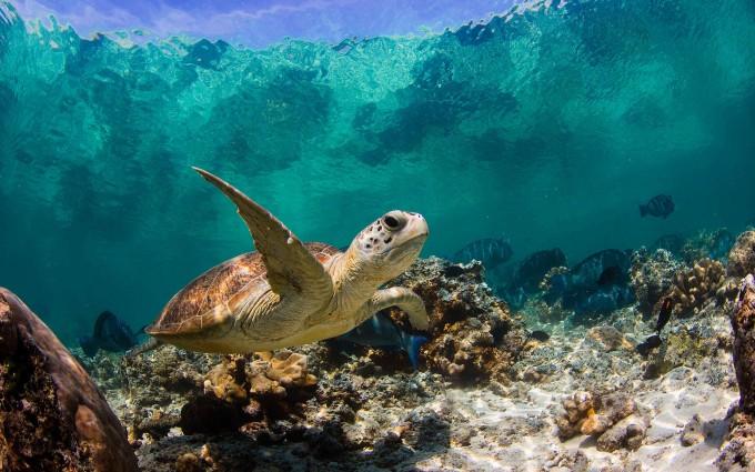 turtle underwater ocean