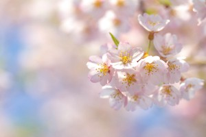 wallpapers hd spring