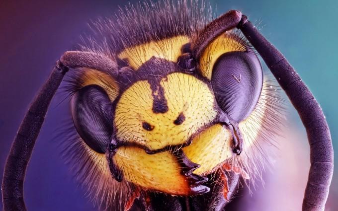 wasp wallpaper