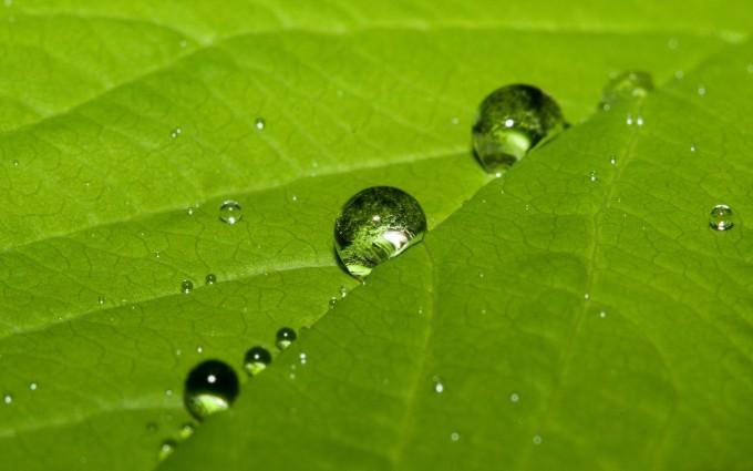 water dew drops leaf