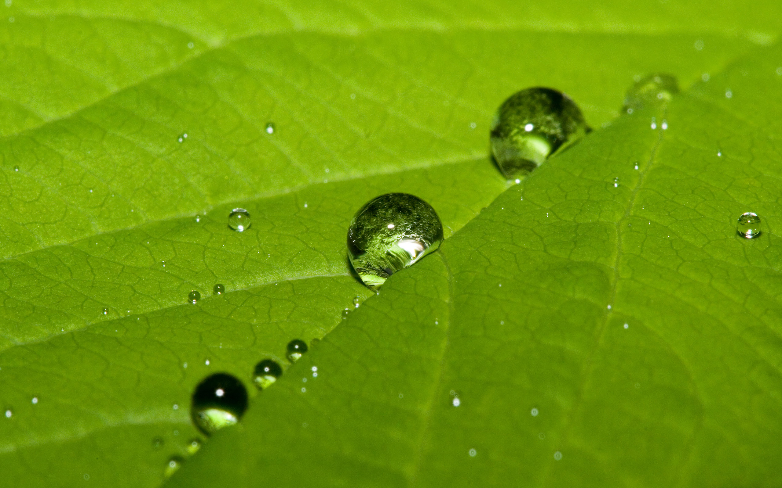 water dew drops leaf