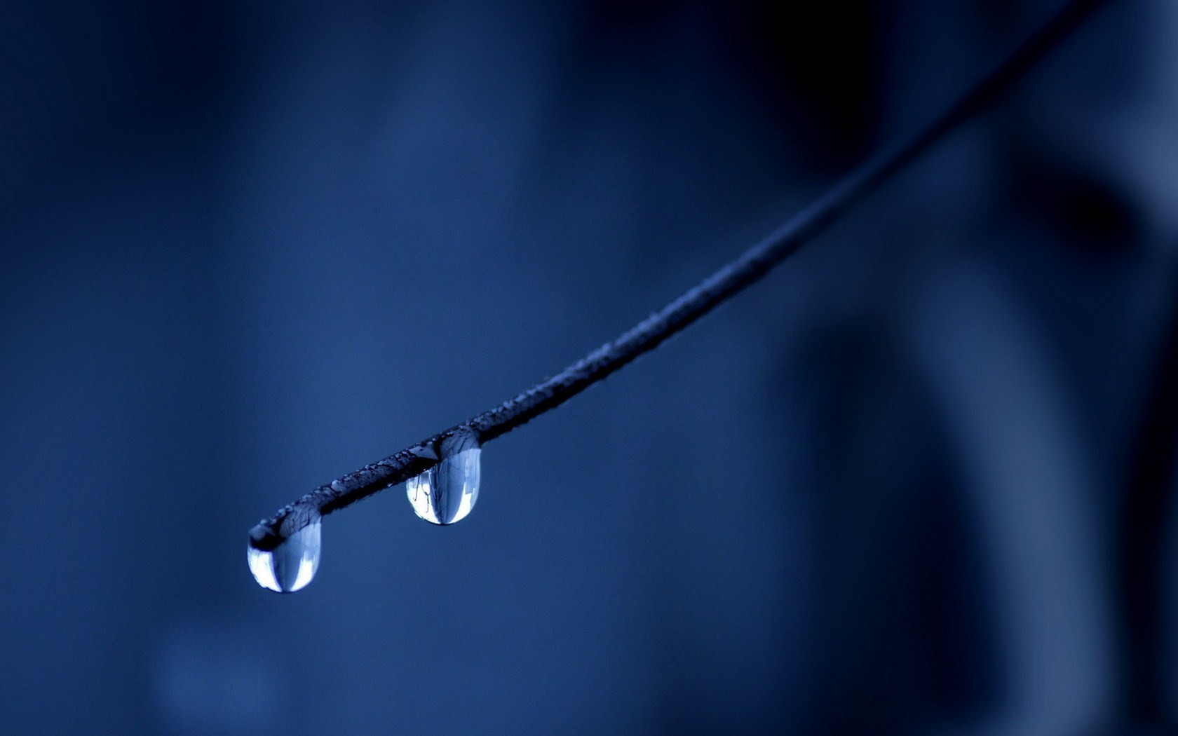 water drops branch picture