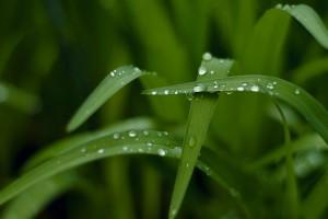 water drops wallpaper grass