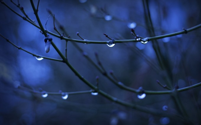 water frops twigs