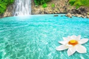 waterfall lotus flower