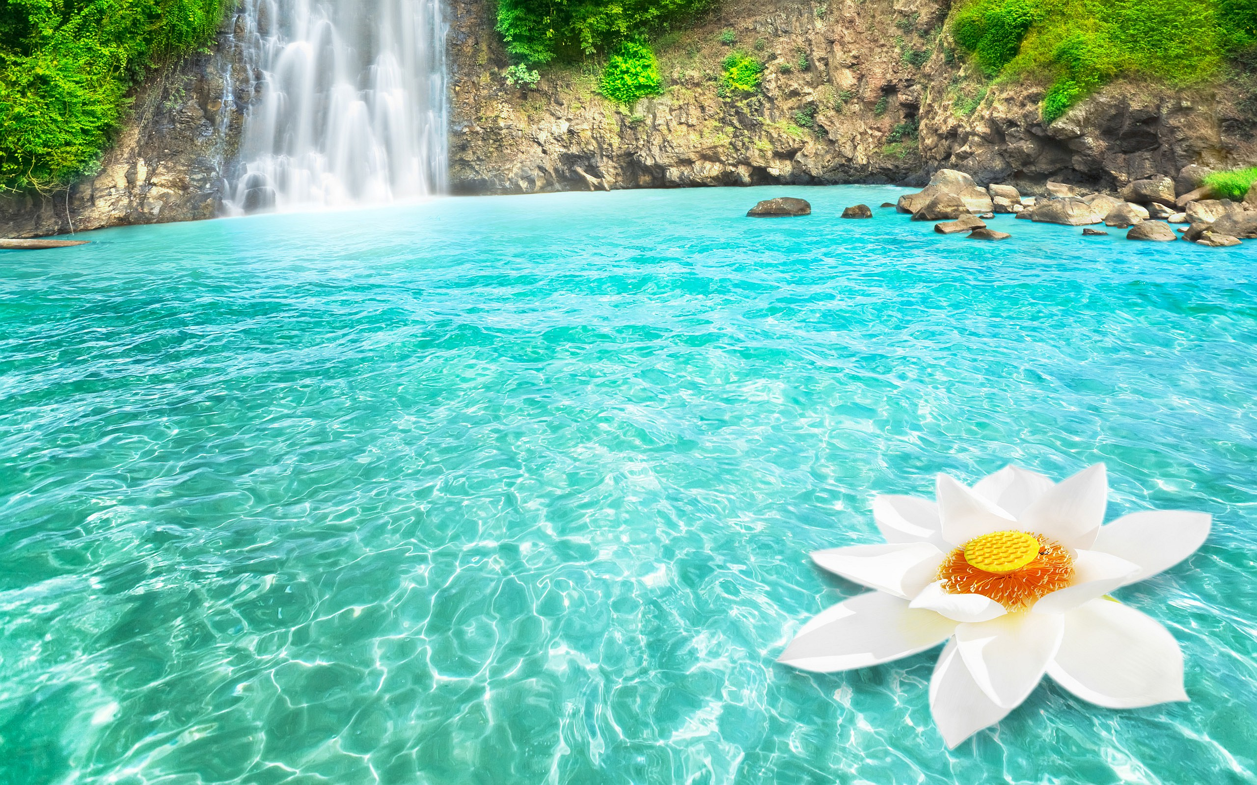 waterfall lotus flower