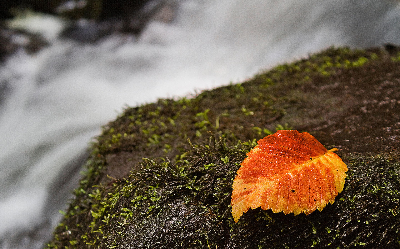 waterfall wallpaper autumn
