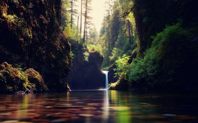 jungle waterfall live wallpaper download