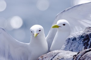 white birds pictures