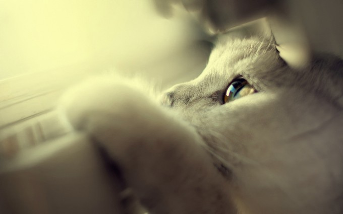 white cat sweet cute