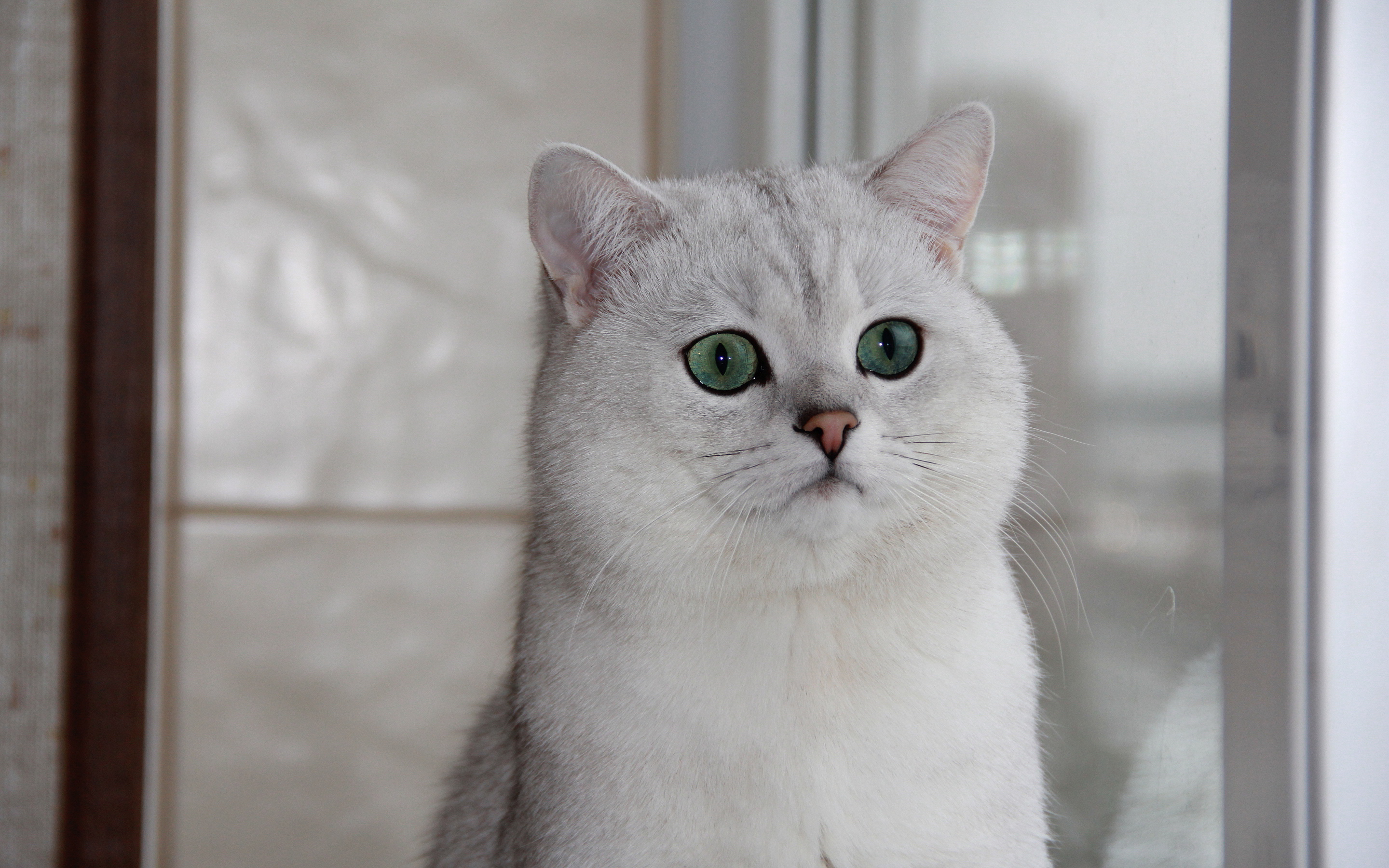 white cat sweet images