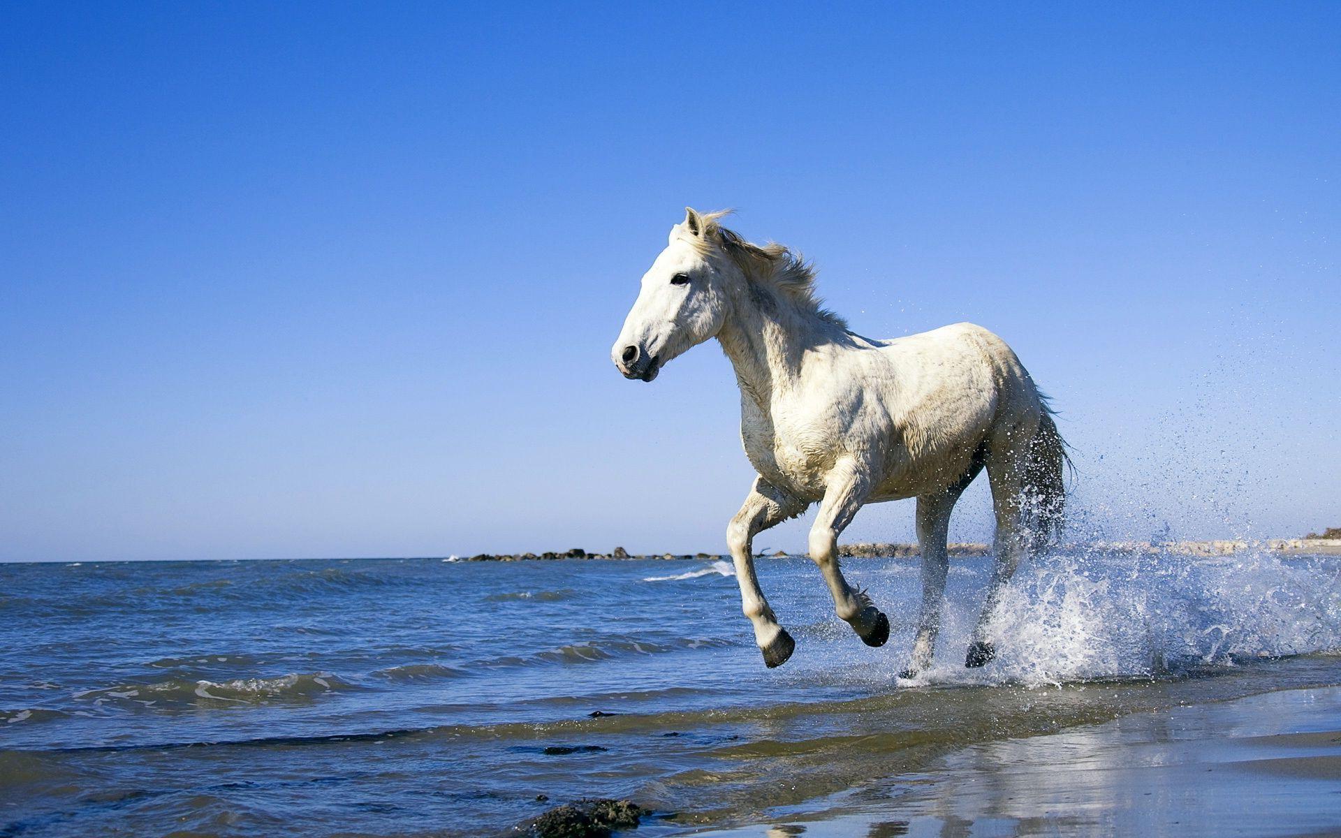 white horse running images