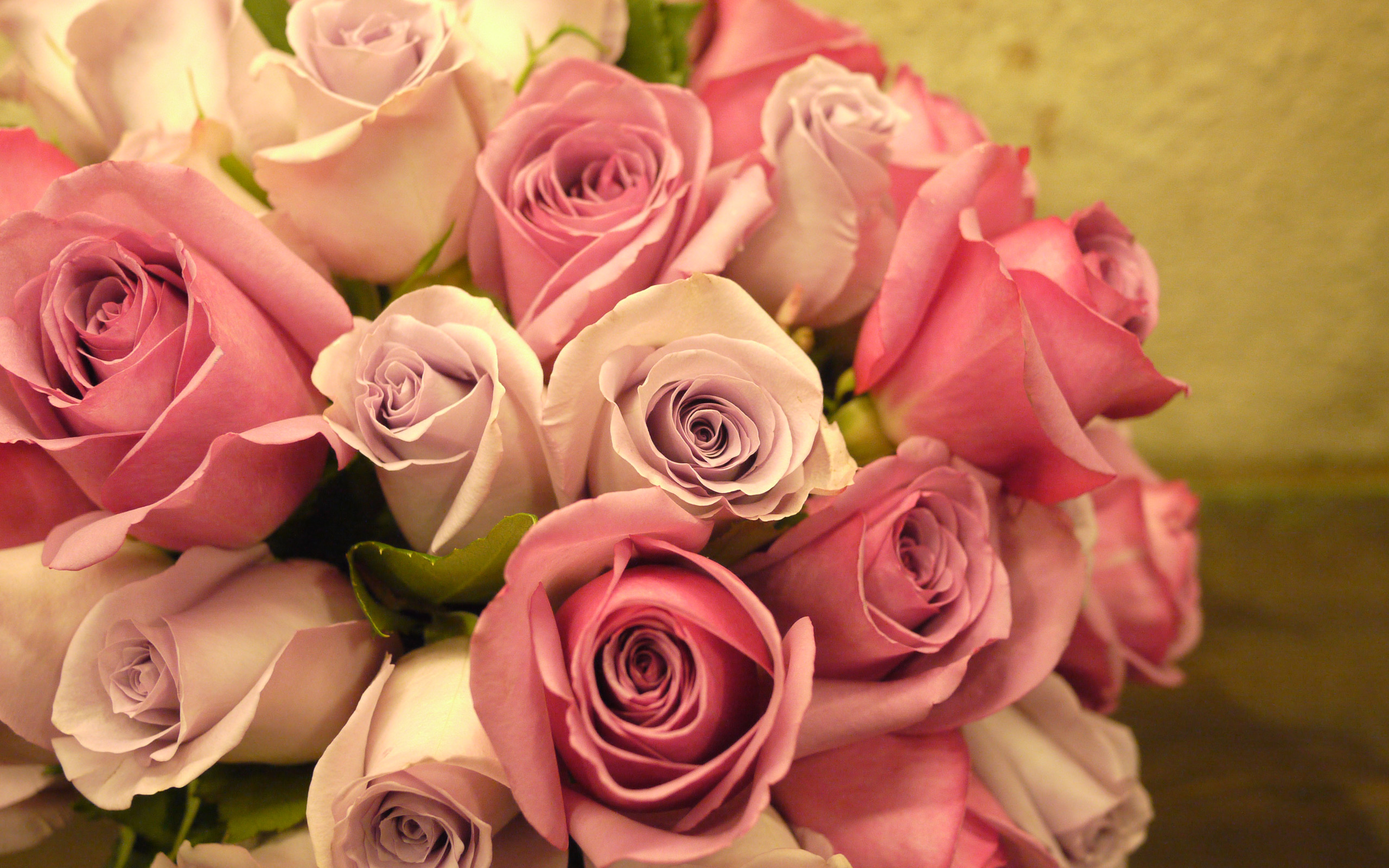 white pink roses