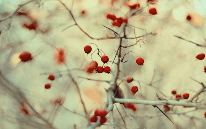 wild berries nature