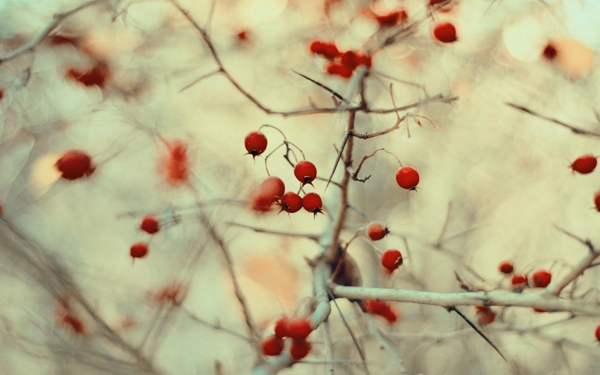 wild berries nature