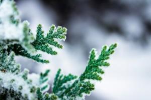 winter computer background