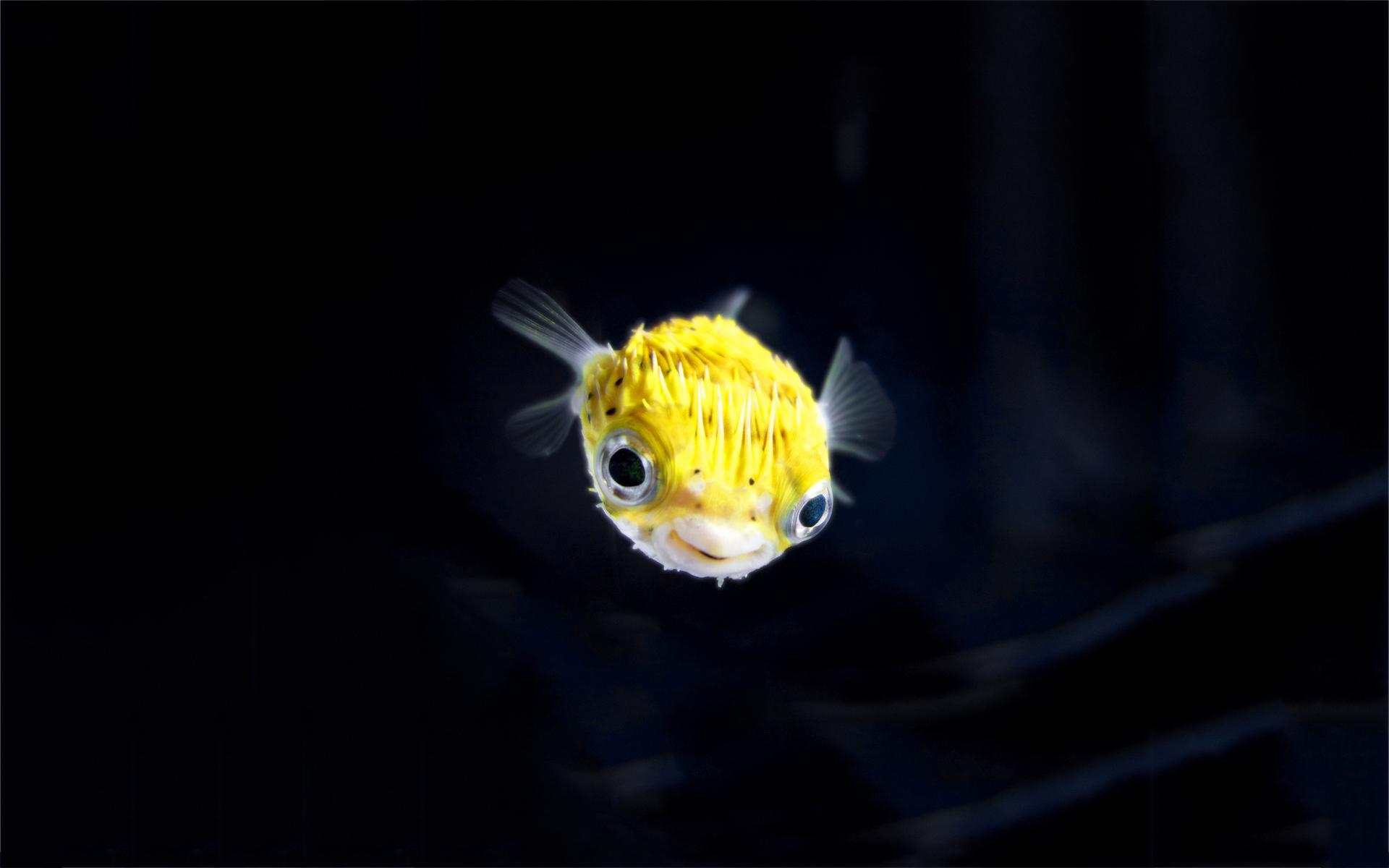 yellow blowfish