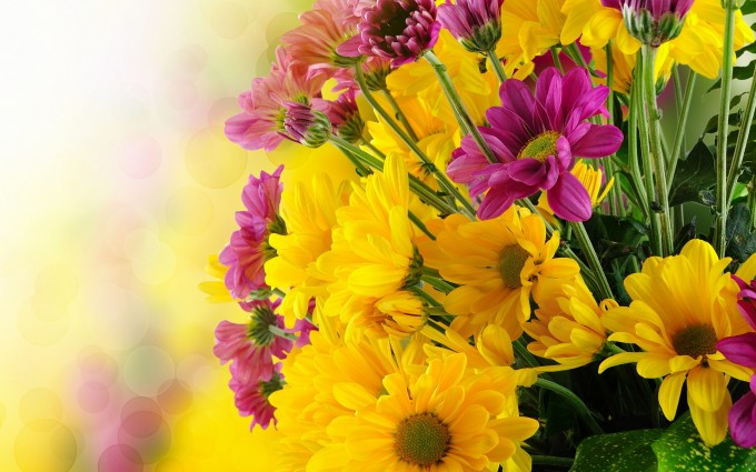 yellow pink flowers