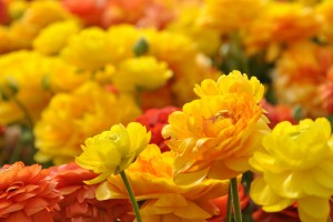 yellow red flowers hd