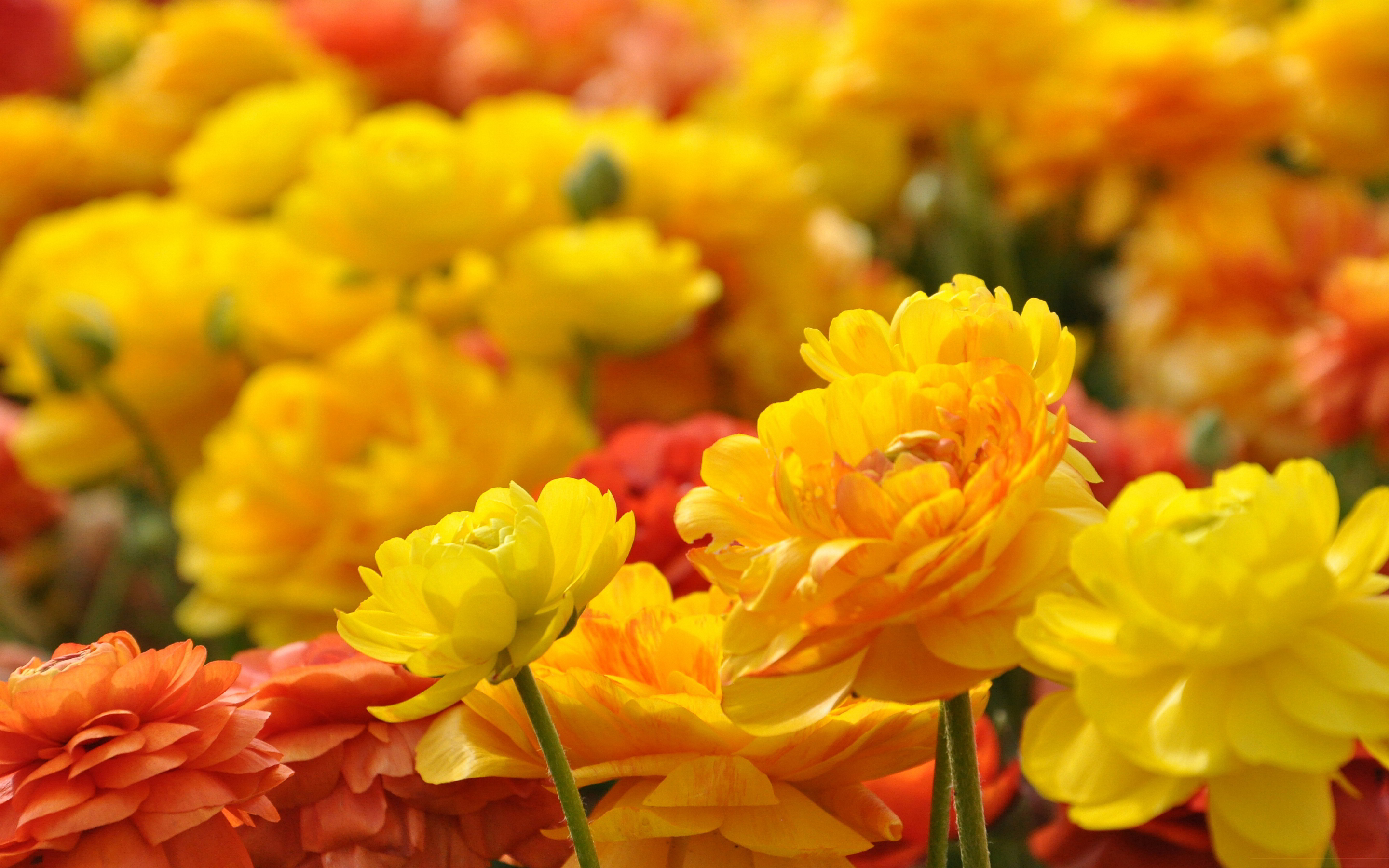 yellow flowers wallpapers pack - photo #43