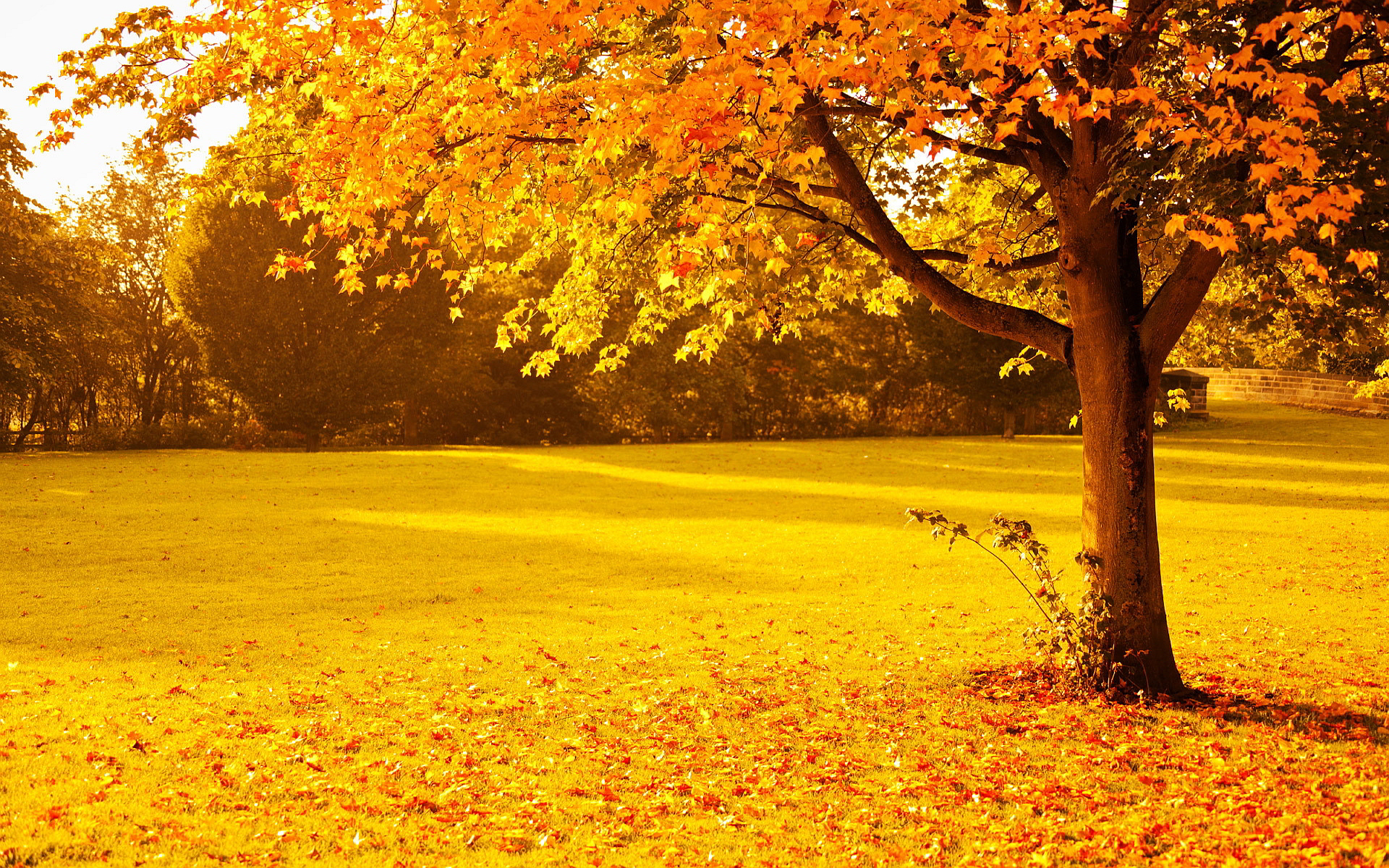 yellowish red park autumn